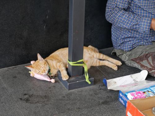 Katze mit Kissen